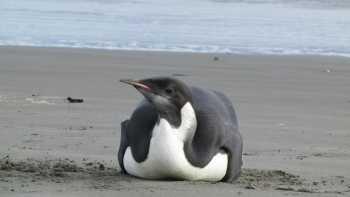 Linux is bloatware too